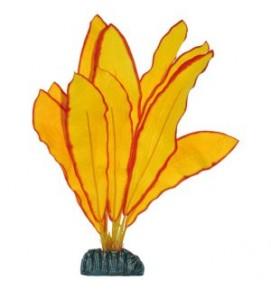 echinodorus amarillo