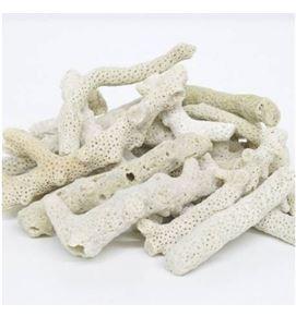 cranc-coral-bones