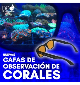 coral_glasses