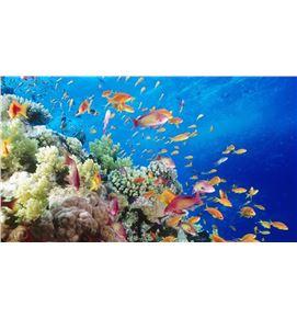 fondo-marino-5-900x506