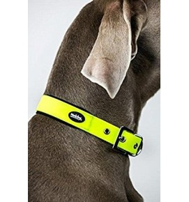 collar-nobby_Amarillo_1