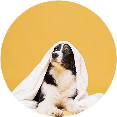 Higiene para perro