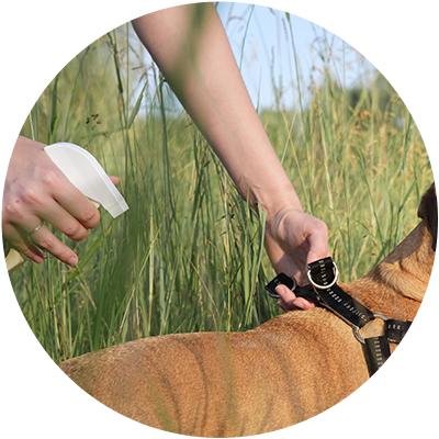 Antiparásitos y repelentes perro