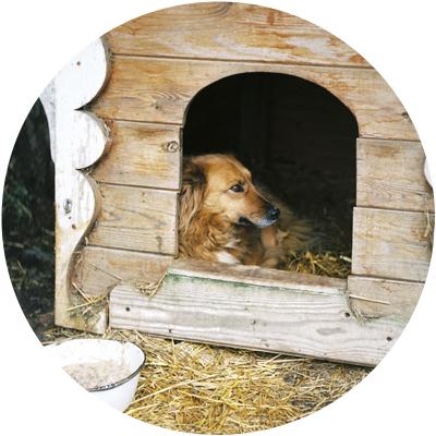 Casetas para perro