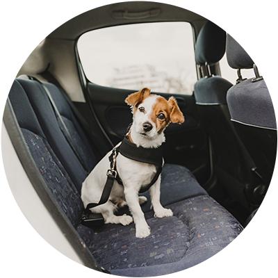 Accesorios coche y viaje