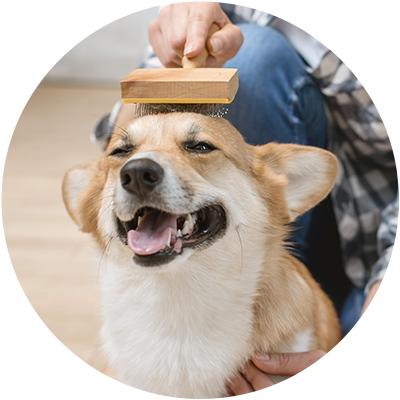 Cepillos y cortauñas perro
