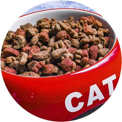 Alimentación para gato