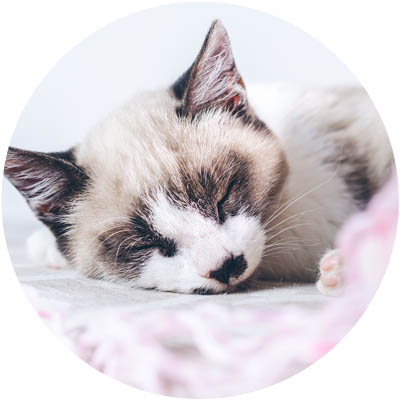Descanso gato