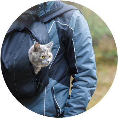 Accesorios gato
