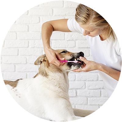 Accesorios higiene perro
