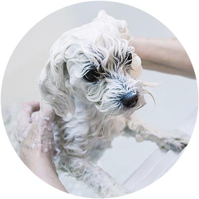 Champú para perro