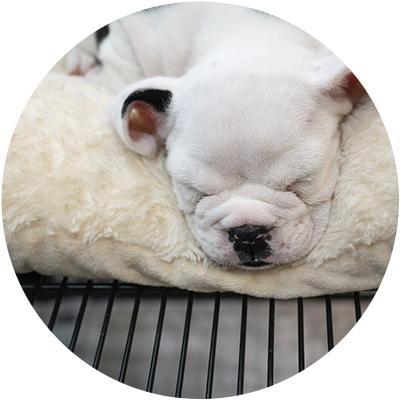 Descanso perro