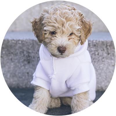 Moda para perro