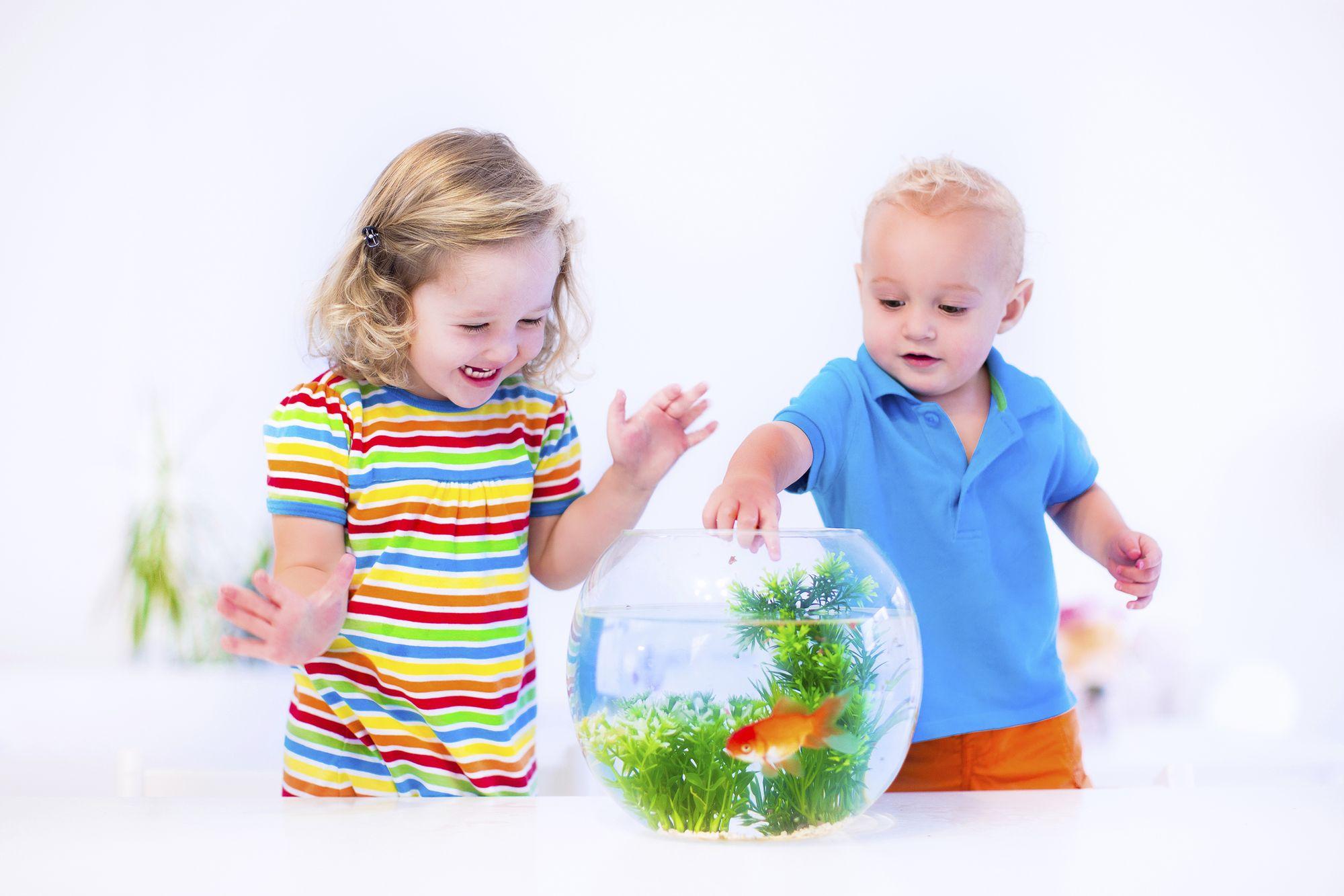 Acuariofilia, los primeros pasos para crear un acuario.