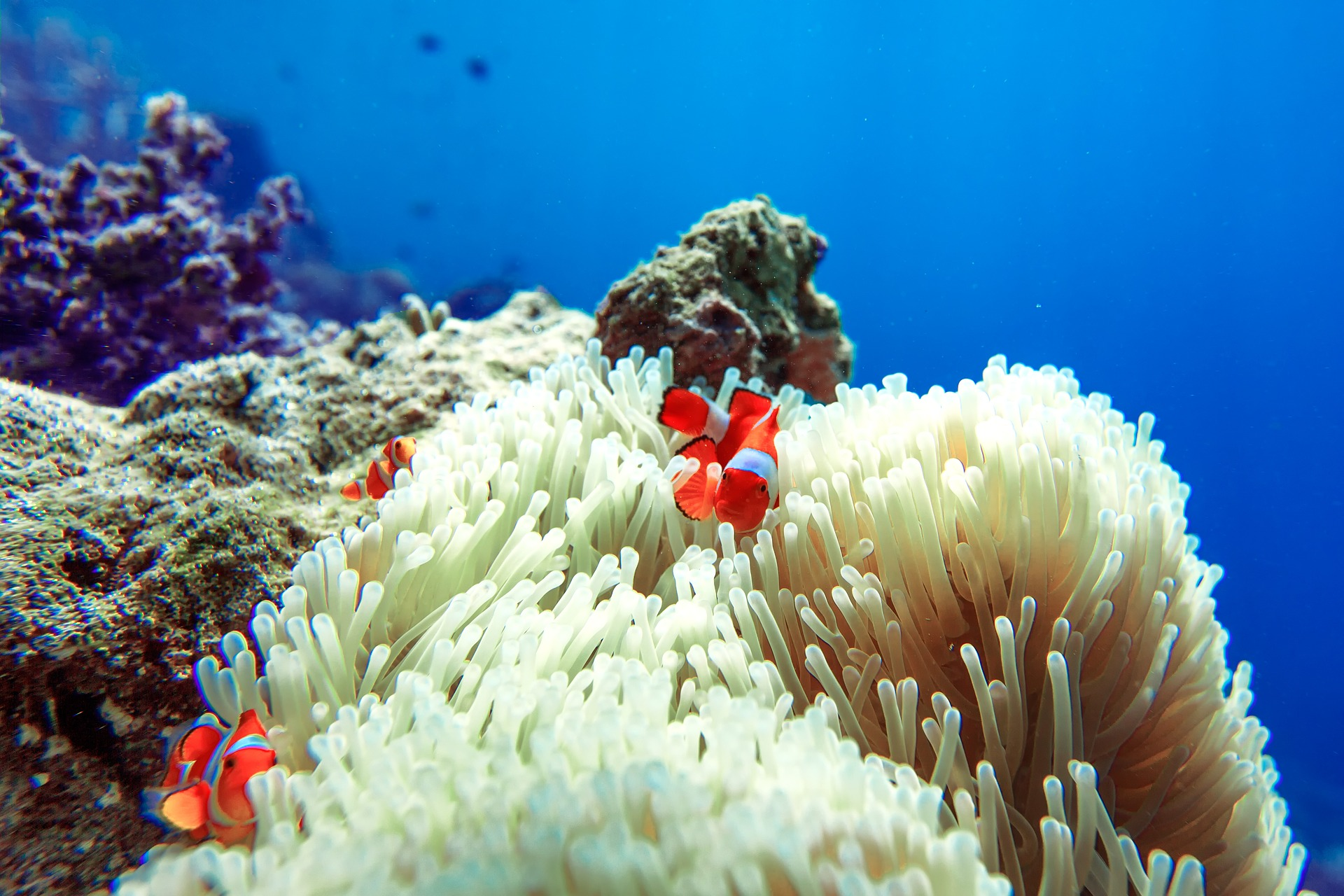 Acuarios marinos, todo lo que tienes que saber si dudas en dar el paso