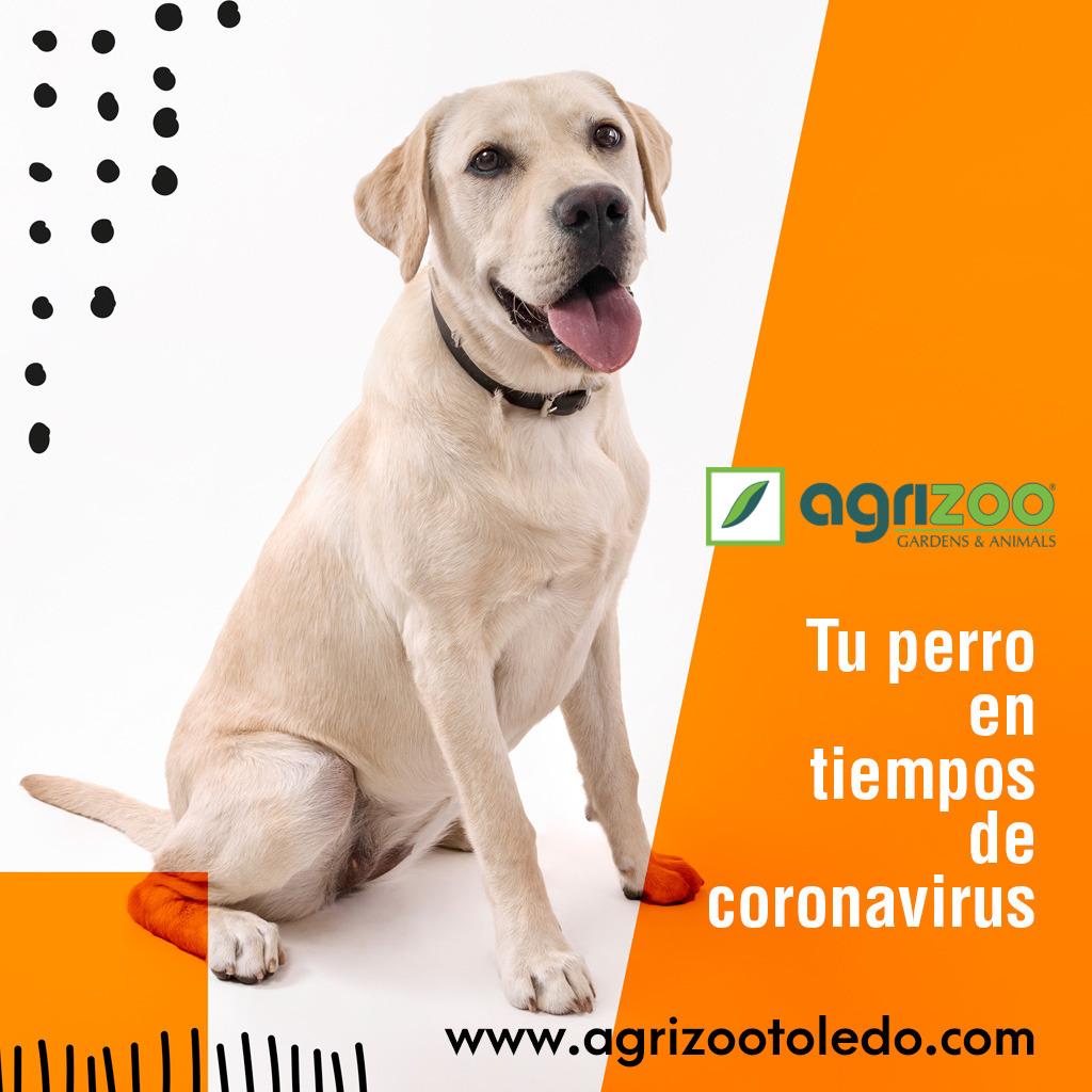 Preguntas más frecuentes sobre tu perro en tiempos de coronavirus