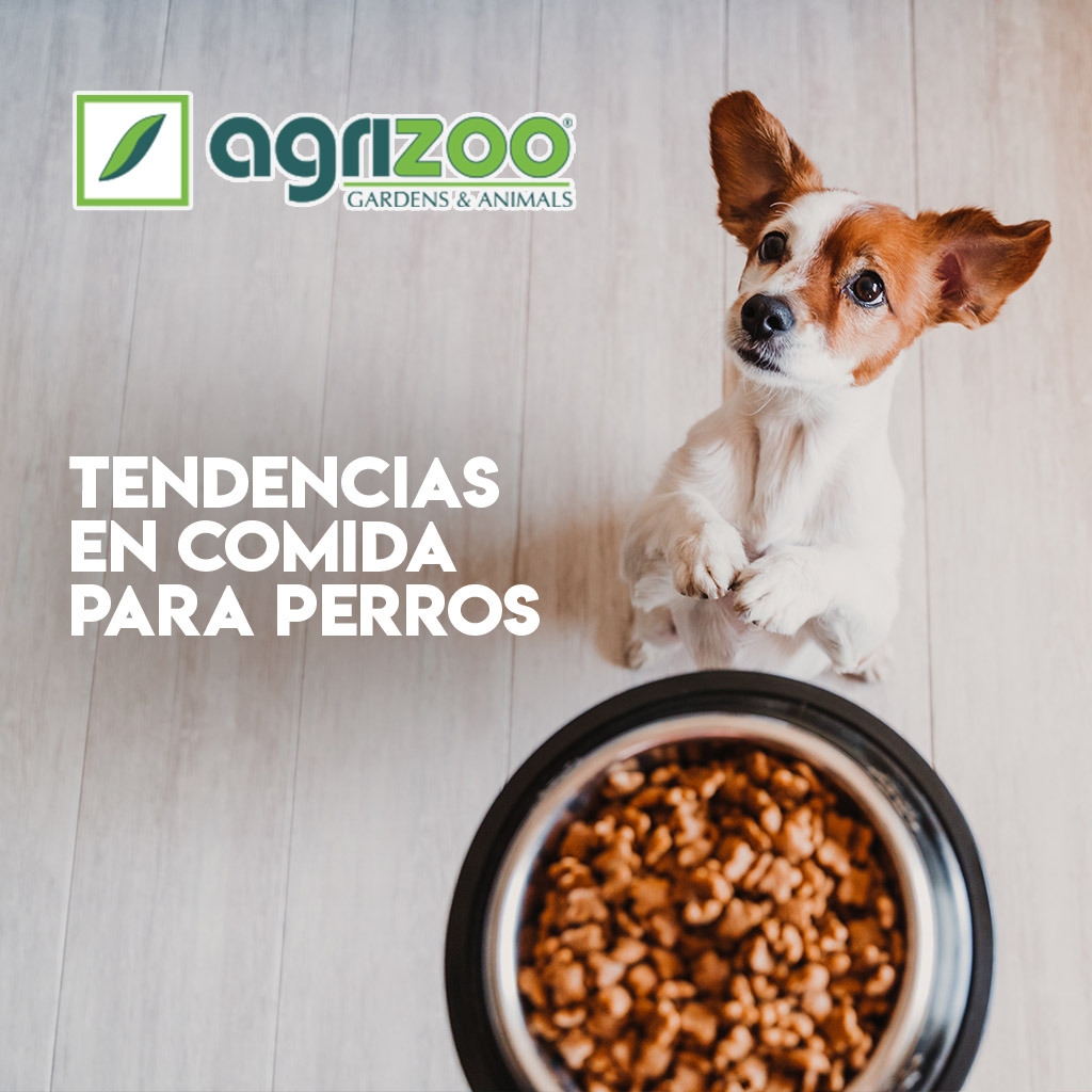 Tendencias petfood que debes conocer