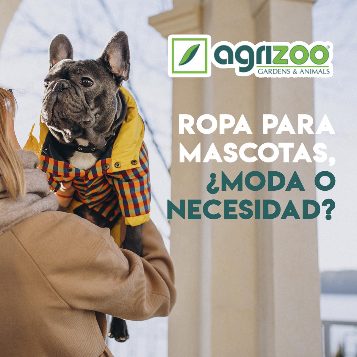 Ropa para nuestras mascotas, ¿moda o necesidad?